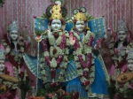 Thakur Shri Shri Radha Golokavihari Ji Bhagavan in Svarna Mukut Darshan
