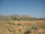 A view of the arid region of Pathmedha Gaushala, exemplifying the mammoth task faced by the Swamiji of the Gaushala effort.